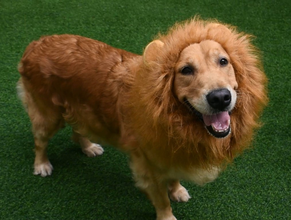 Lion Mane Wig for Dog and Cat Costume Pet Adjustable Washable Comfortable Fancy Lion Hair Dog Clothes Dress for Halloween Christmas Easter Festival Party Activity RosyLife AL106