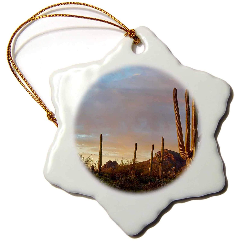 3dRose Cactus Arizona Snowflake Ornament Tucson Mountains 3 Saguaro National Park