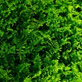 Glass Home Gardens Fresh Fern Living Moss