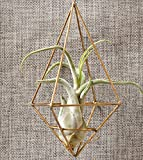 XiYunHan Geometry Flower Pot, Creativity Wedding Flower Stand Air Pineapple Geometry Diamond Type Copper Frame Plant Stand Wall Decoration Ornaments Home Container Floor-standing Bracket 3 Size
