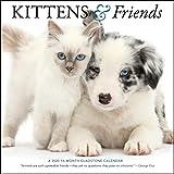 Kittens & Friends 2020 Calendar