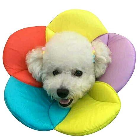 DELIFUR Collar de cono de perro Cuello de mascota Cono para mascotas Collares isabelinos para gatos