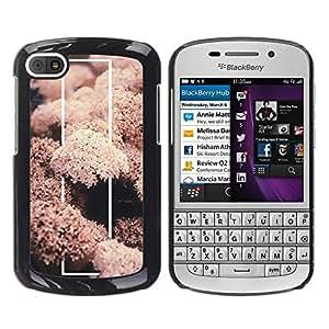 Be Good Phone Accessory // Dura Cáscara cubierta Protectora Caso Carcasa Funda de Protección para BlackBerry Q10 // Coral Sea Life Nature Fish Diving Underwater