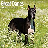 Great Danes 2018 16 Month Wall Calendar 12 x 12 inches Bright Day Calendars Publishing