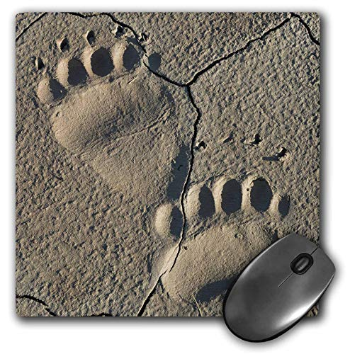 3dRose Danita Delimont - Bears - Footprints of Adult Coastal Grizzly Bear. Lake Clark NP, Alaska. - Mousepad (mp_314477_1)