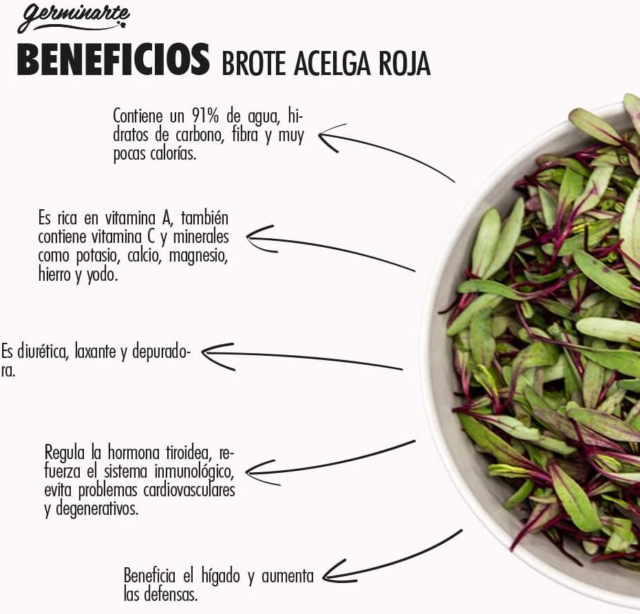 SEMILLA DE BROTE ACELGA ROJA | 75 gr.- 500 gr. - 1 kgr. | 55 ...