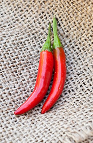 Kimchi Traditional Korean Variety Chile Heirloom Pepper Premium Seed - Kim What Chi Is