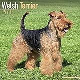 Welsh Terrier Calendar - Dog Breed Calendars - 2017 - 2018 wall Calendars - 16 Month by Avonside