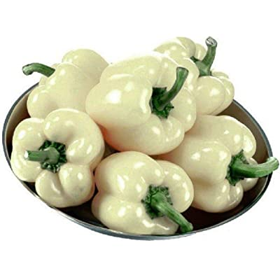 Diamond White Bell Pepper Seeds - A MUST for gourmet home gardeners.!!!!(10 - Seeds) : Garden & Outdoor