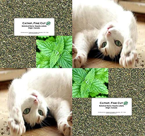 Bulk Catnip – Fine Cut Catnip Nepeta cataria – For CAT KITTY KITTEN CHEW TOY or mix with treat – By Oakland Gardens…