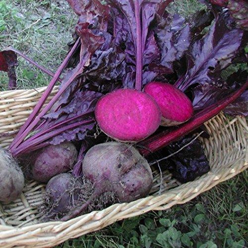 David's Garden Seeds Beet Bulls Blood D2912A (Burgundy) 500 Organic Heirloom (Beef Burgundy Sauce)