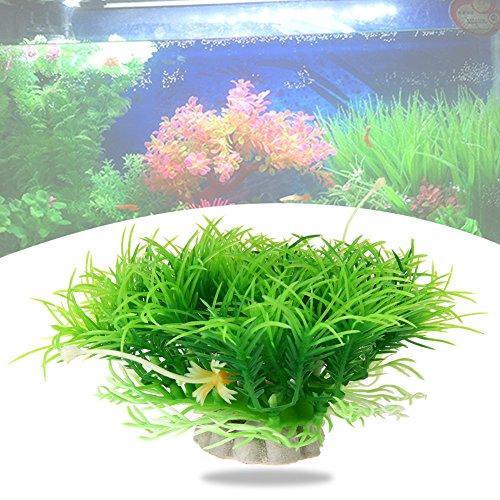 Review PyLios(TM) 10cm Underwater Aquarium