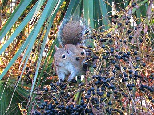 Squirrel's Natural Health (That Squirrel)