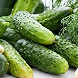 David's Garden Seeds Cucumber Pickling Boston SS30098A...