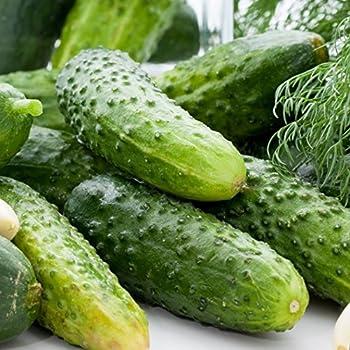 David's Garden Seeds Cucumber Pickling Boston DGS30098A (Green) 50 Heirloom Seeds