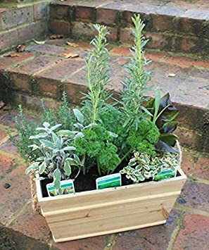 Delightful Herb Planter