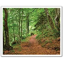 J.P. London Peel and Stick Removable Wall Decal Sticker Mural, Forest Trail Autumn Trees, 24 by 19.75-Inch