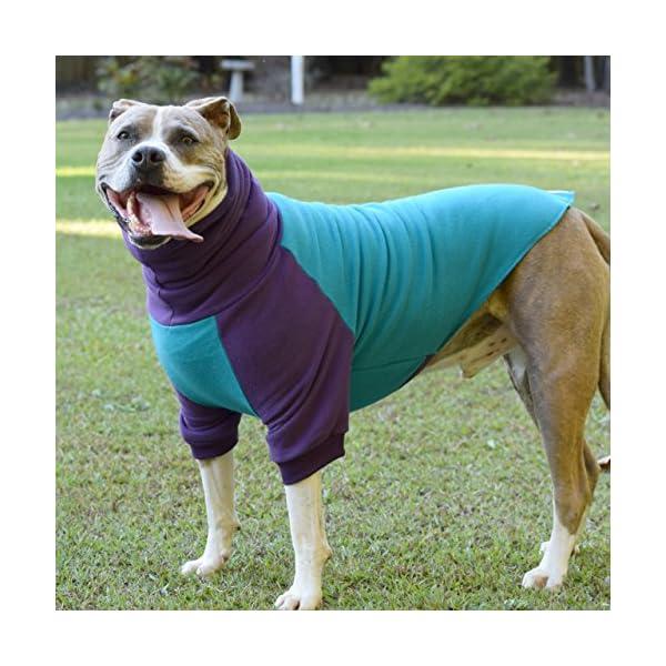 Tooth & Honey Dog Sweater/Pitbull/Large Dog/French Bulldog/Colorblock Sweatshirt/Pullover 3