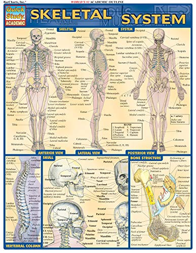 Skeletal System (Quick Study Academic) (Human Anatomy And Physiology Skeletal System Test)