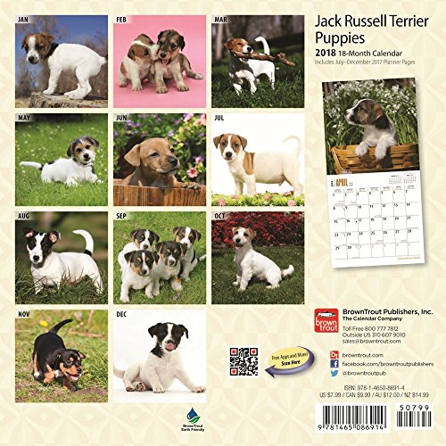 Jack Russell Terrier Puppies 2018 Small Wall Calendar Photo #3