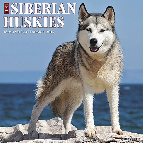 Just Siberian Huskies - 3