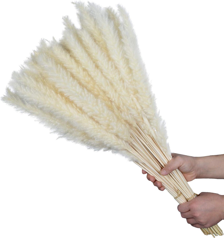 """24""""(2ft) Pampas Grass Large 60Pcs Tall Dried Pompous Grass Pompass Branches for Vase Flower Arrangement Wedding Kitchen Home Decor (White)"""