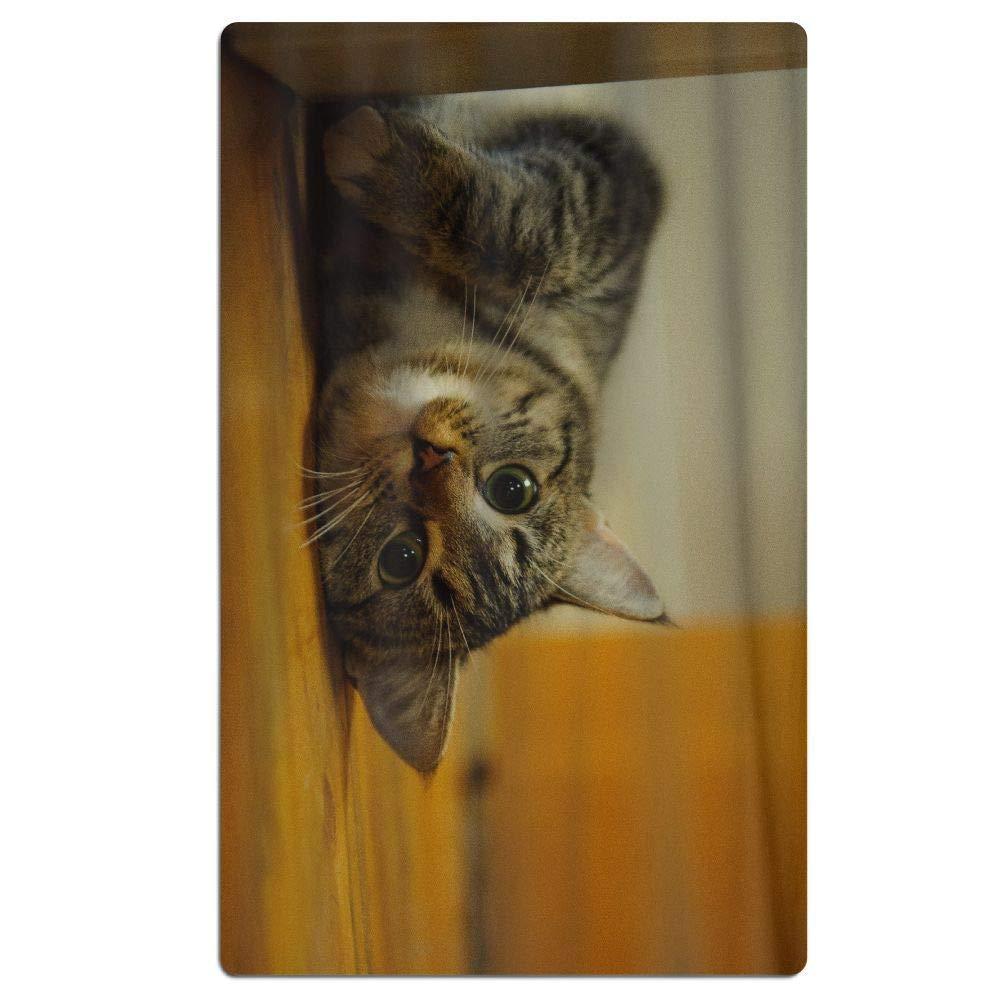 Cat Kitten 31.5 X 51 Ultra leicht /& Schnelltrocknend,Sauna Handt/ücher f/ür Reise,Strand /& Sport,Fitness Handtuch und Sporthandtuch CHSUNHEY Strandt/ücher Badet/ücher Strandtuch