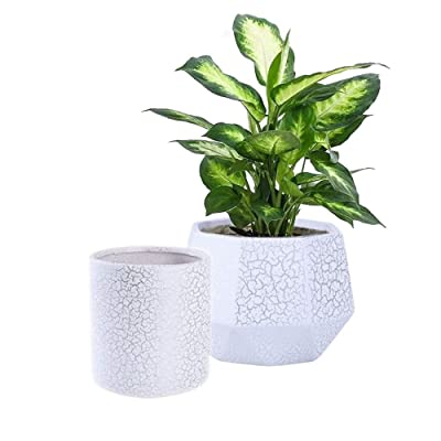 Set of 2 Ceramic Flower Pot Garden Planters, 6 Inch Indoor Plant Containers with Drainage Hole, White and Silver Detailing : Garden & Outdoor