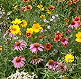 Flower Seeds - Best Reviews Guide