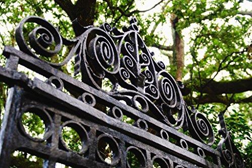 Close Up of Ornate Iron Gate Charleston Photo Art Print Poster - French South Quarter Carolina