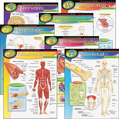 TREND enterprises, Inc. T-38913 The Human Body Learning Charts Combo Pack, Set of 7