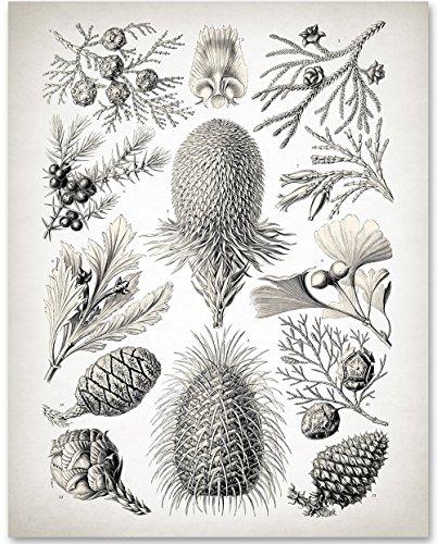 Pinecone Mountain (Pine Cone Art Botanical Print - 11x14 Unframed Art Print - Great Bedroom or Cabin Decor)