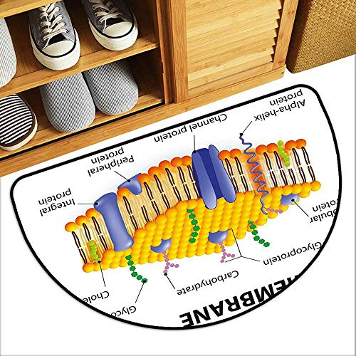 DILITECK Door mat Educational Detailed Diagram of Membrane Cell Structure Types of Protein Molecules Suitable for Outdoor and Indoor use W36 xL24 Yellow Blue Green ()