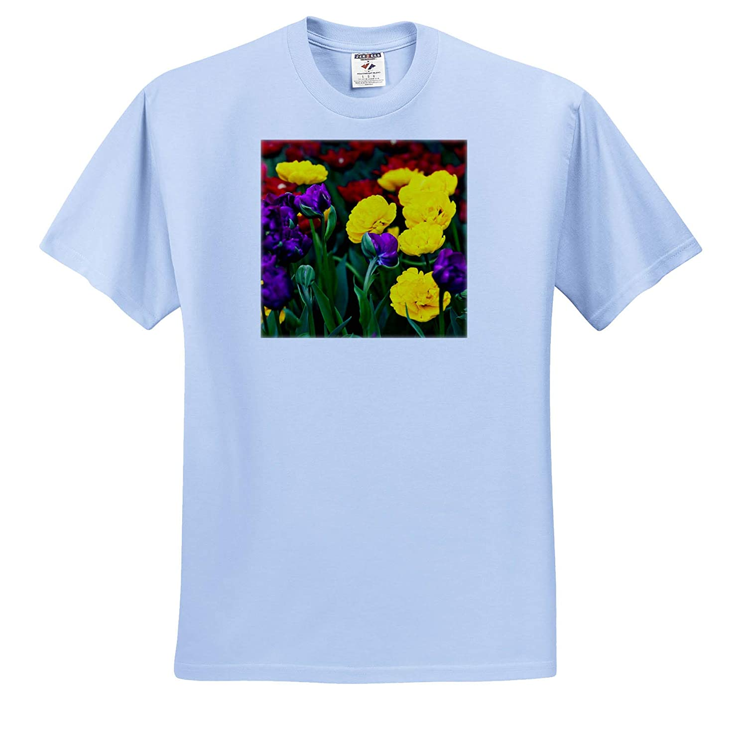 3dRose Alexis Photography Flowers Tulips T-Shirts red Decorative Tulip Flowers on a Flowerbed in Spring Purple Yellow