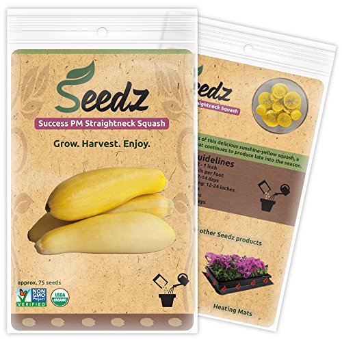 CERTIFIED ORGANIC SEEDS (Approx. 75) - Yellow Squash Seeds - Heirloom Seeds - Non GMO, Non Hybrid - USA (Yellow Bell Tomato Seeds compare prices)