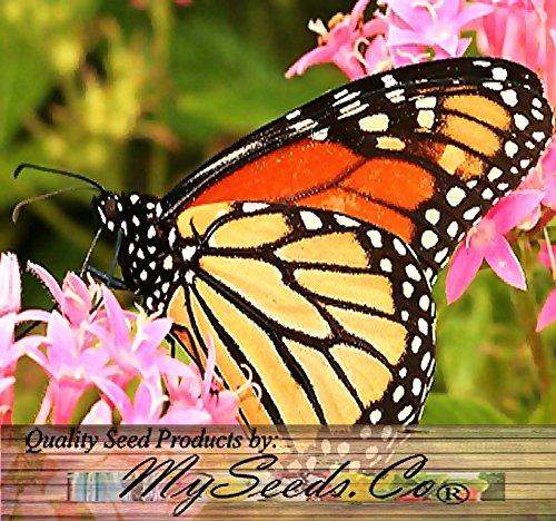 Big Pack - (7,000+) Milkweed Butterfly Weed Mix - Flower Seeds by MySeeds.Co (Big Pack - Milkweed Mix)