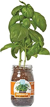 Back to the Roots Garden in A Jar (Basil)