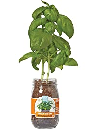 Back to the Roots Garden in A Jar, Basil