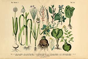 Vegetables Fruit and Berries of The Garden Victorian Botanical Illustration Cool Wall Decor Art Print Poster 18x12