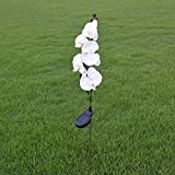 Outdoor Solar Garden Stake Lights - Solar Powered Lights with 5 Phalaenopsis Flowers, LED Solar Decorative Lights for Garden, Patio, Courtyard (White)