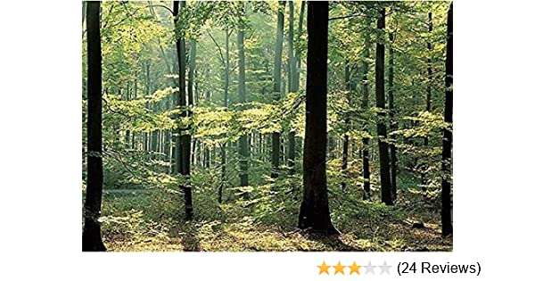 Amazon.com: Enchanted Forest Huge Wall Mural 12 Feet 6 Inch Wide x 9 ...