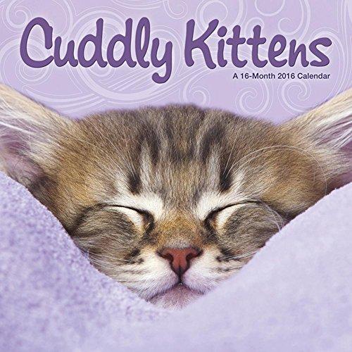 2016 Monthly Wall Calendar - Cuddly Kittens