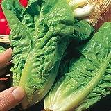 SeeKay Lettuce 'Little Gem' Cos type - Appx 2000 seeds