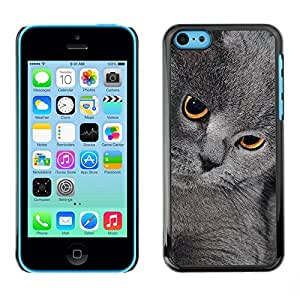 Be Good Phone Accessory // Dura Cáscara cubierta Protectora Caso Carcasa Funda de Protección para Apple Iphone 5C // British Shorthair Korat Chartreux Cat