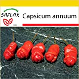 SAFLAX - Potting Set - Chili - Peter Peppers Penis Chili - 10 seeds - Capsicum annuum