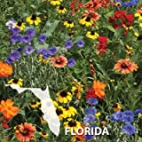 1,000 Wildflower Seeds well adapted mix native to Florida by Seeds and Things