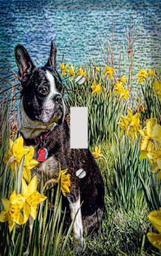 Boston Terrier in Daffodils Decorative Switchplate - Stores Outlet Boston