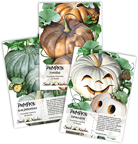 ed Collection (3 Individual Seed Packets) Non-GMO Seeds by Seed Needs (Pumpkin Seed Packet)