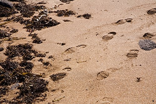 Footprints on a sandy beach. Seaweed. Snaefellsnes (Snæfellsnes) peninsula, West Iceland. 30x40 photo reprint by PickYourImage