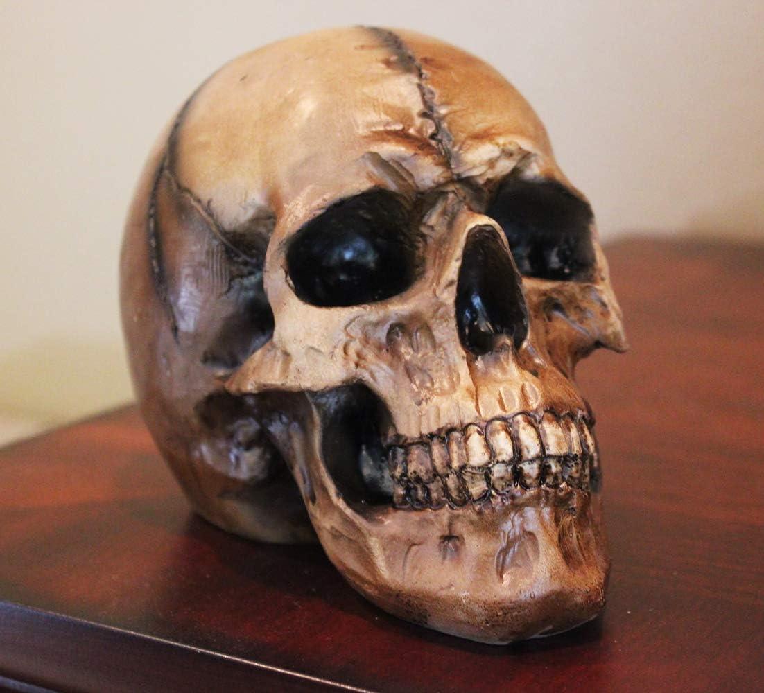 Seraphic Scary Halloween Human Skull Statue, Brown